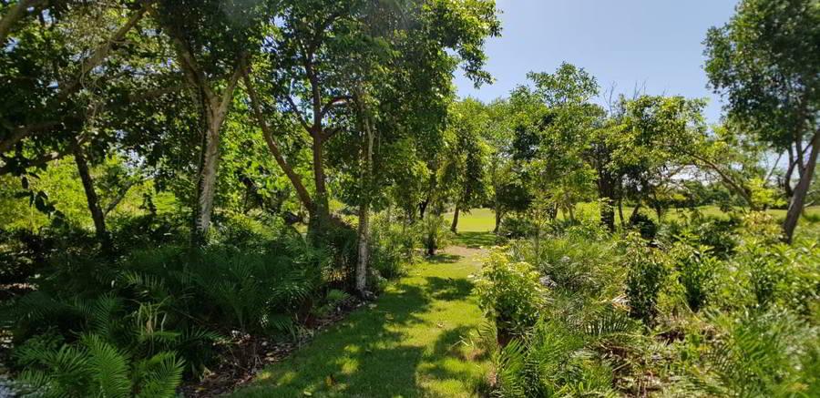 Punta Cana property sfwert4545